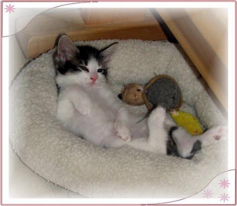 kitten bottle feeding schedule
